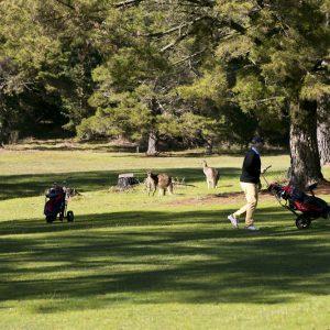 GolfClub140