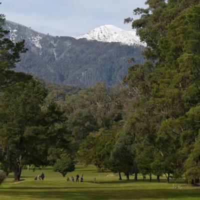 GolfClub236