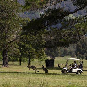 GolfClub61